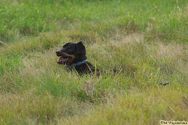 tarzanie w trawie